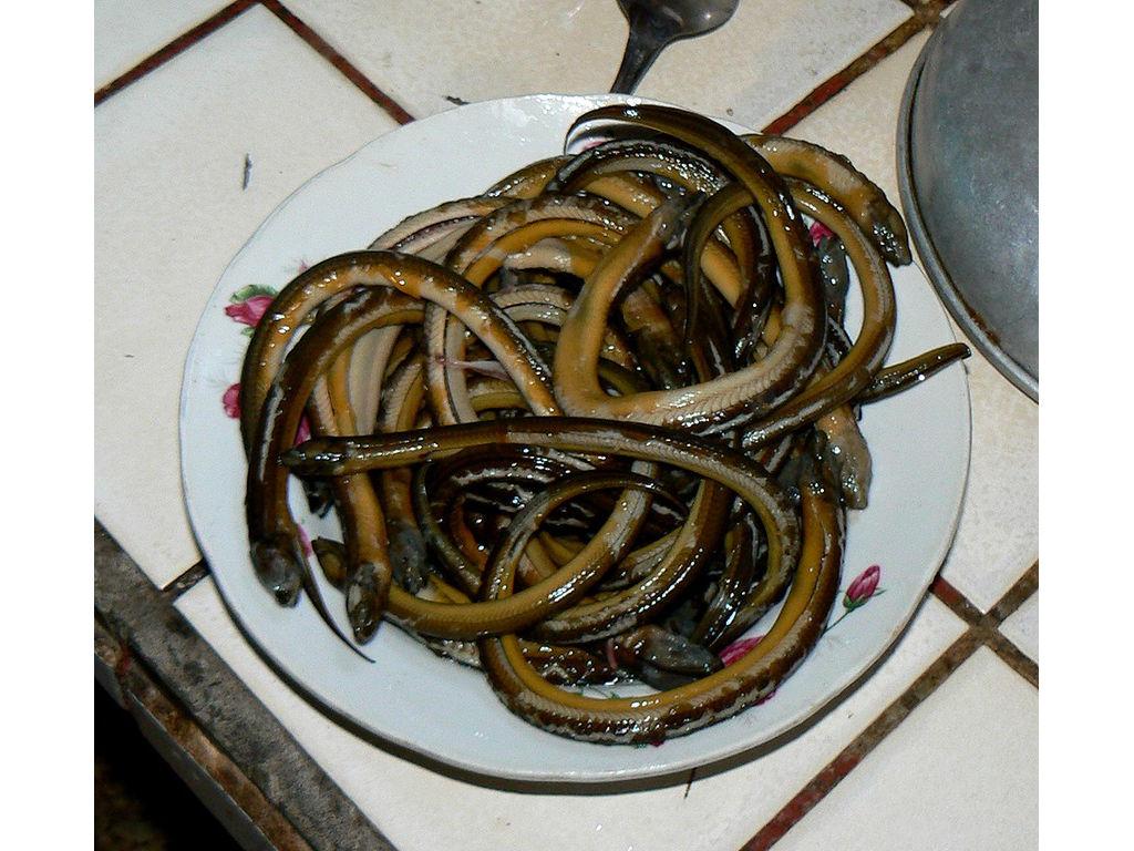 lindung-eels-boiled-07a.jpg