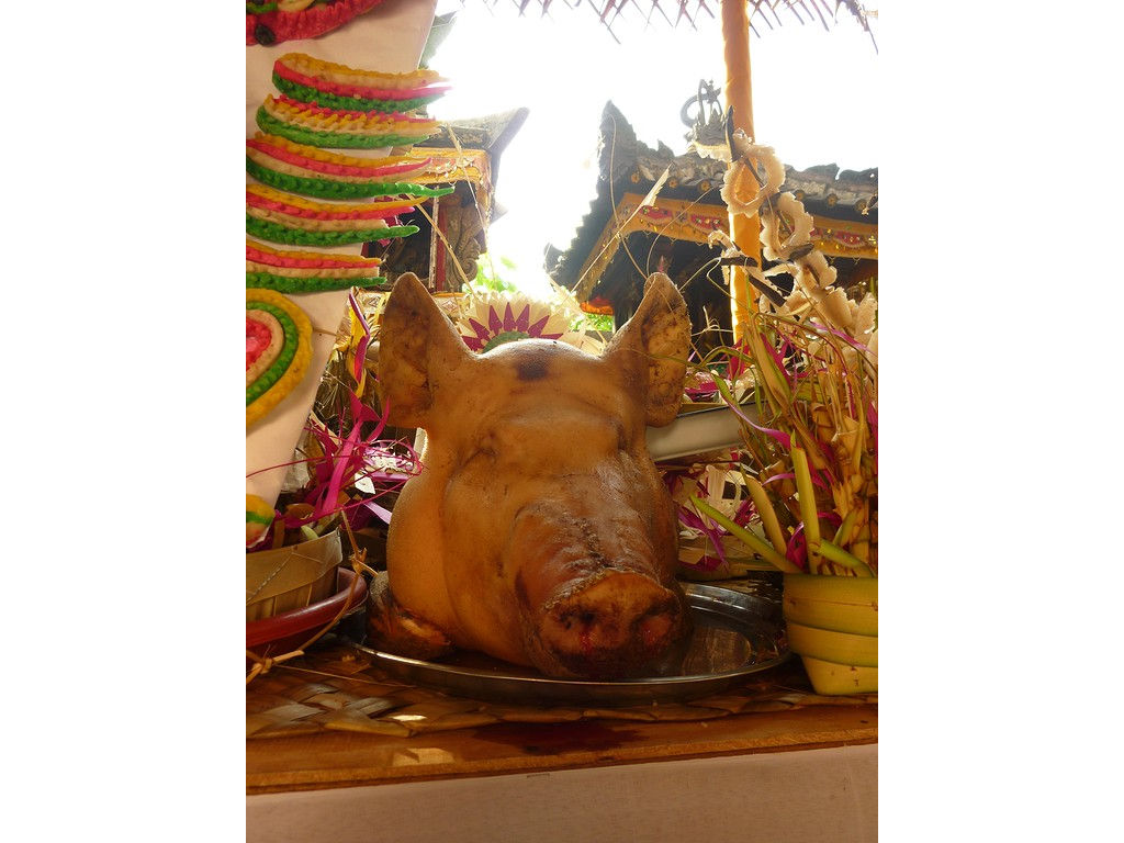 pigs-head-2.jpg