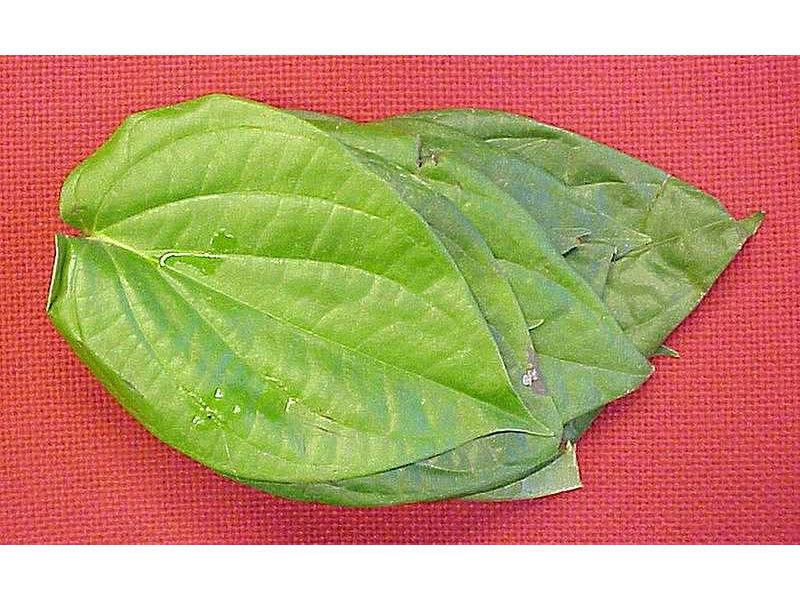 sirih-piperbetlelinn-leaves-krambitan.jpg