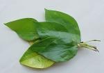 sirih-piperbetlelinn-leaves-ubud.jpg