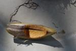 072-pinang shell-open.jpg