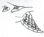 shoulder scarf-woman-bludiran-embroidery-flowers-Sunarto 106.jpg